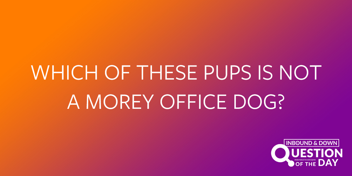Which of these pups is not a Morey office dog?